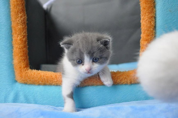"""我国首只克隆猫今日满月 名叫""""大蒜""""与克隆原体同名"""