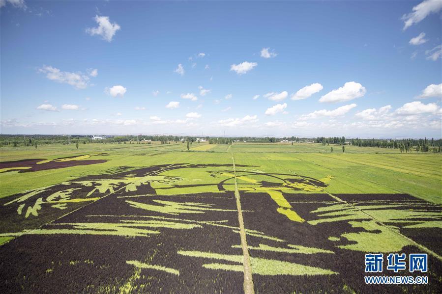 新疆:稻田画迎八方游客