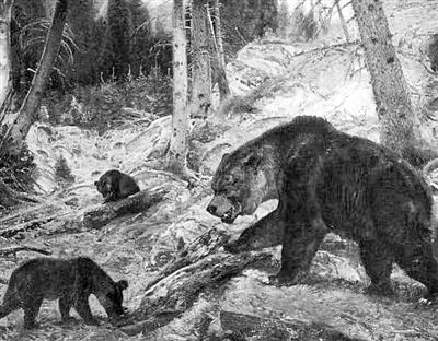 人类与洞熊灭绝存在重大关系