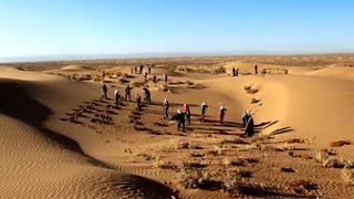 習近平甘肅行 | 看八步沙林場新面貌