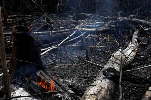 """""""地球之肺""""受重创 亚马孙森林大火已持续燃烧16天"""