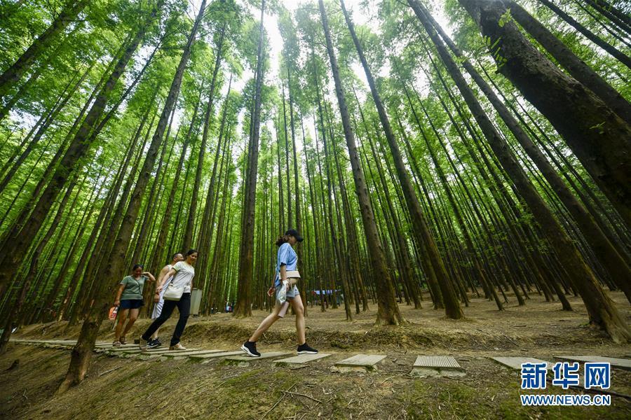 重庆南川:林中休闲觅清凉