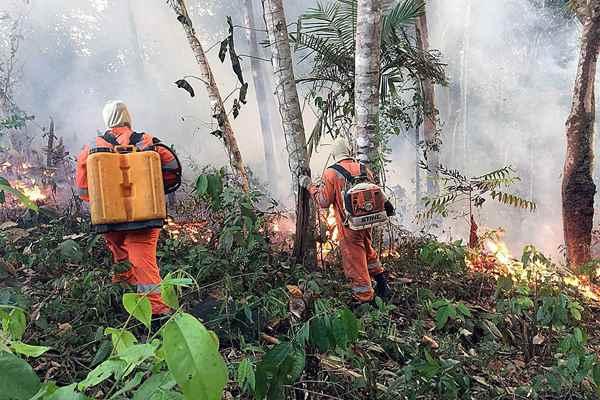 地球之肺在燃烧!亚马逊雨林大火连烧三周创纪录