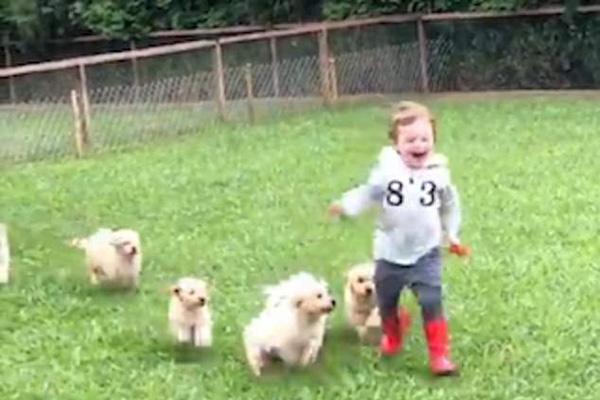 超萌!巴西十只小金毛追趕男孩 追到后熱情將其撲倒
