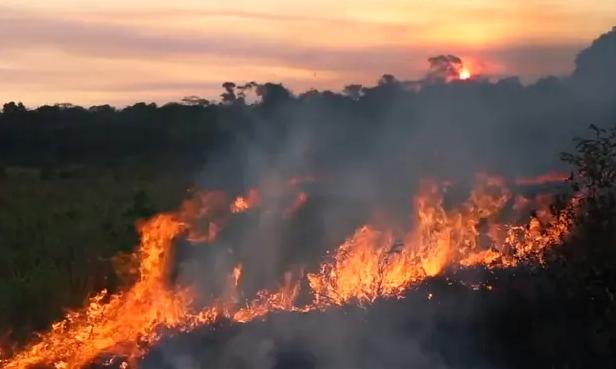 马克龙要G7重点讨论热带雨林大火,被巴西总统暴怼:这是巴西内政,你是在哗众取宠