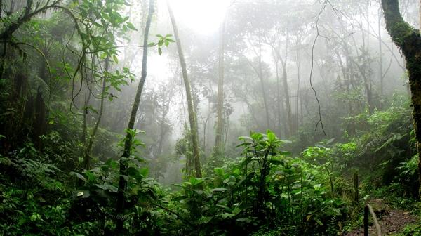 研究发现亚马逊雨林吸收的碳远远少于预期