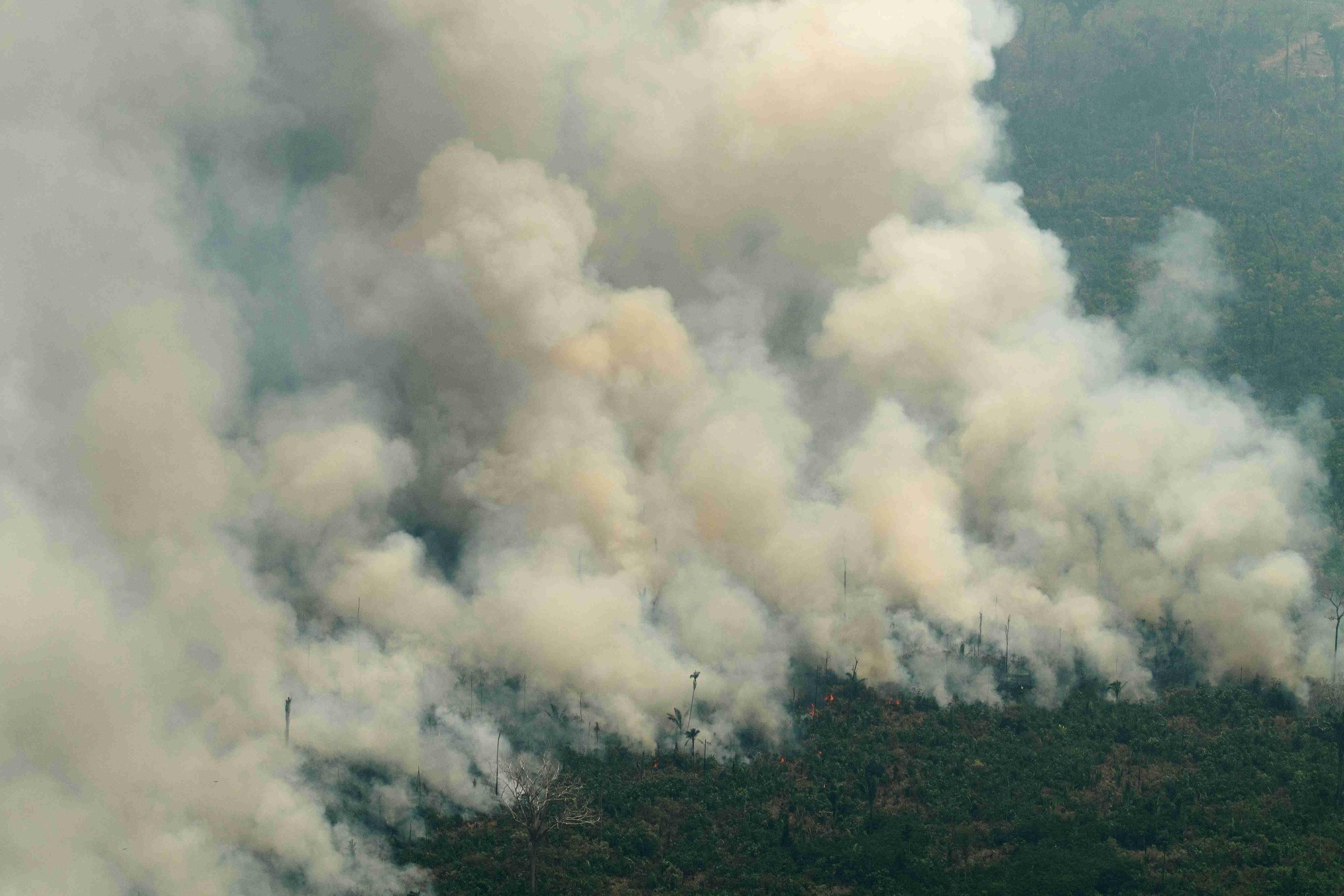 火灾持续三周 亚马逊雨林满目疮痍