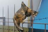 九条命!流浪猫身体被金属栏杆刺穿幸运生还