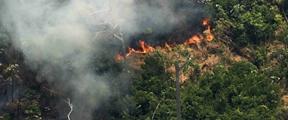 巴西总统:可以派军队前往亚马孙雨林灭火