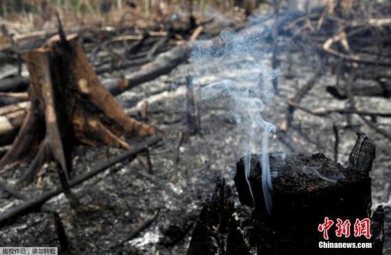 """""""地球之肺""""仍浓烟笼罩 联合国吁保护亚马孙雨林"""