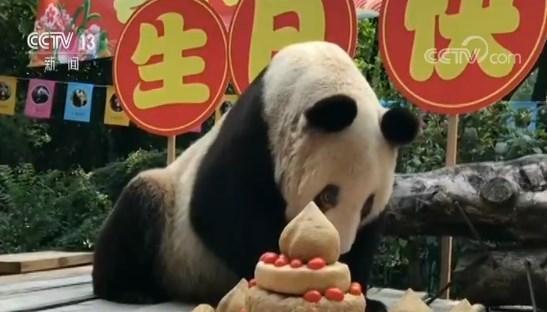 重庆:全球最年长大熊猫庆37岁生日