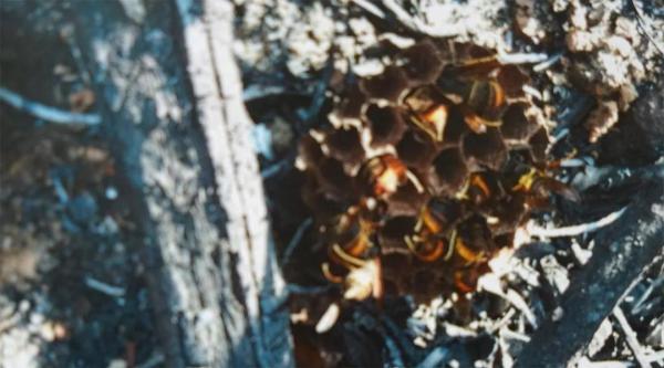 珠海一男子为吃蜂蛹烧马蜂窝引发山火,被判一年赔20余万