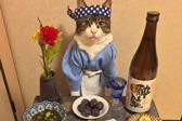 铁路站长、捕鼠官、摄影模特,如何成为猫生赢家