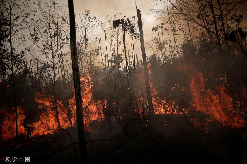多国愿帮亚马孙雨林灭火 中国专家支招儿:最好是用大型飞机灭火