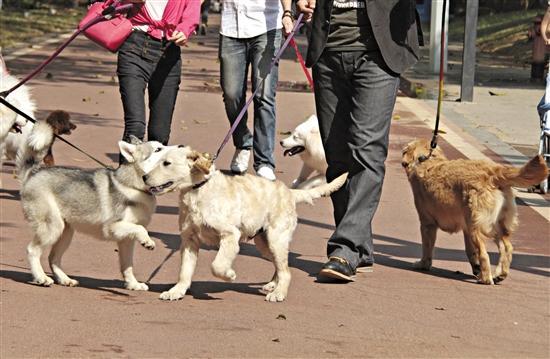 東莞:每條犬都有智能牌 犬只傷人不送診最高或罰5千