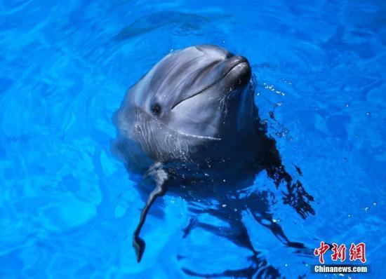 数量下降引担忧 新西兰禁止游客与宽吻海豚游泳