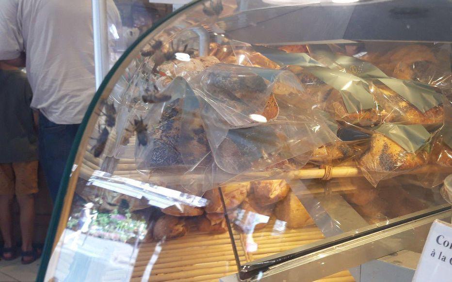 法国数百蜜蜂因蜂巢被毁 涌进一面包店内