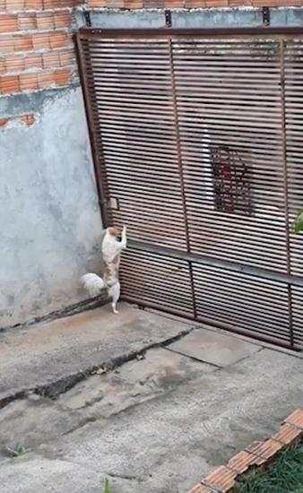 机智!巴西一宠物狗钻洞逃跑消失 主人困惑不已