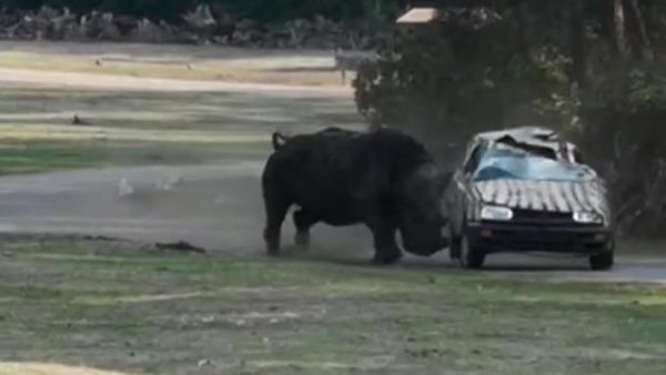 震惊!德国野生动物园一暴躁犀牛攻击汽车