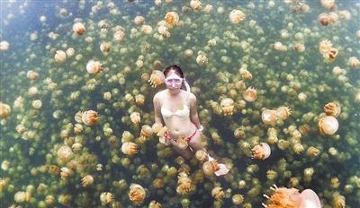 美轮美奂 潜泳者与几千只水母共舞