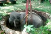 印度一大象被困深井 军人出动起重机救援
