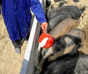 猪肉一天一个价!