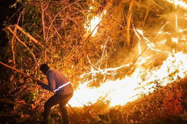 巴西圣保罗州一种植园起火 过火面积达百公顷