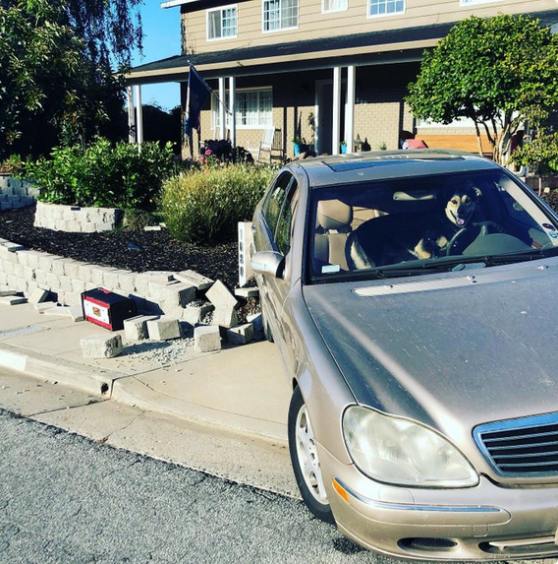 """轿车街上遇""""车祸"""",肇事""""司机""""居然是只狗?!"""