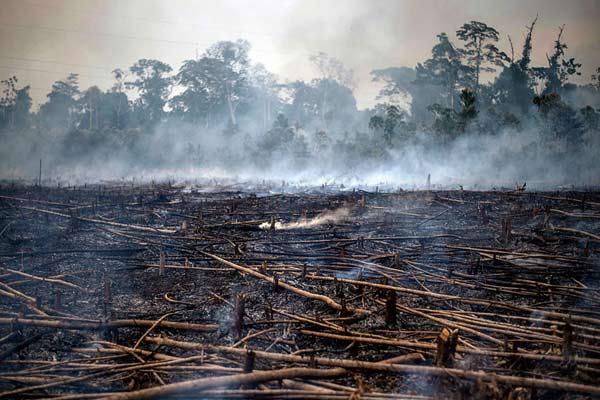秘鲁农民为毁林开荒焚烧热带雨林 林间烟雾弥漫