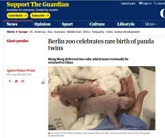 """默克尔访华前,柏林动物园大熊猫""""梦梦""""产下双胞胎"""