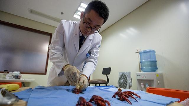 杭州外科医生用手术刀剥小龙虾