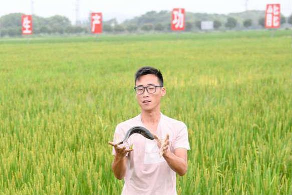 稻鱼、稻鳖共养迎丰收