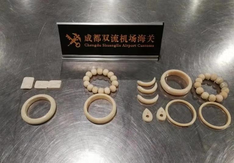 携带濒危物种及其制品属违法 成都海关截获象牙制品