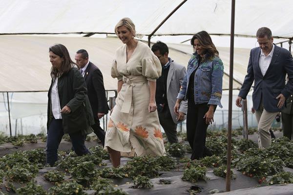 """美国""""第一千金""""伊万卡参观哥伦比亚草莓农场"""