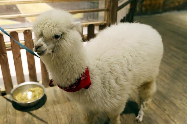 室内动物园悄然兴起 可爱动物吸引市民驻足