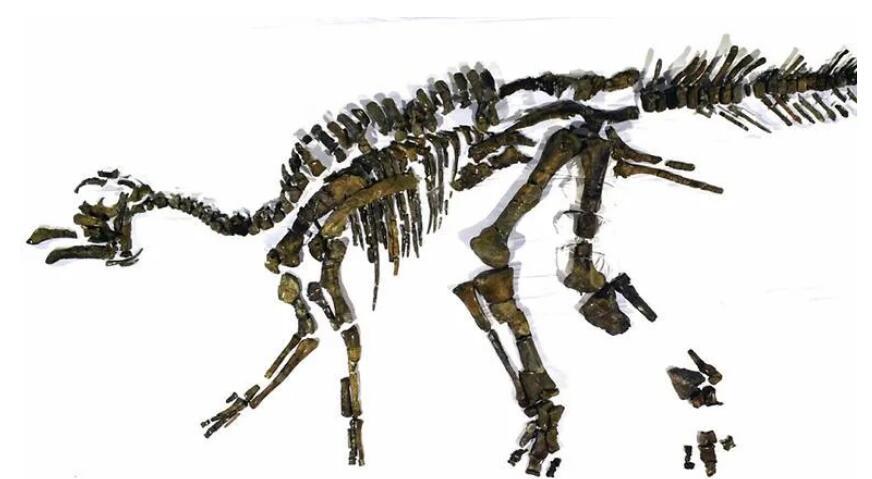 """日本科学家发现恐龙新物种,命名""""日本龙神"""""""