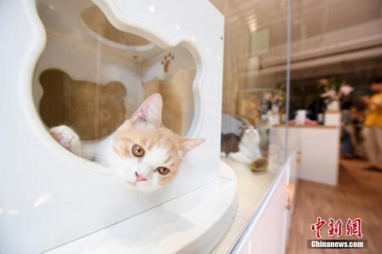 专家:巴西宠物猫数量或将在五年内超过宠物狗