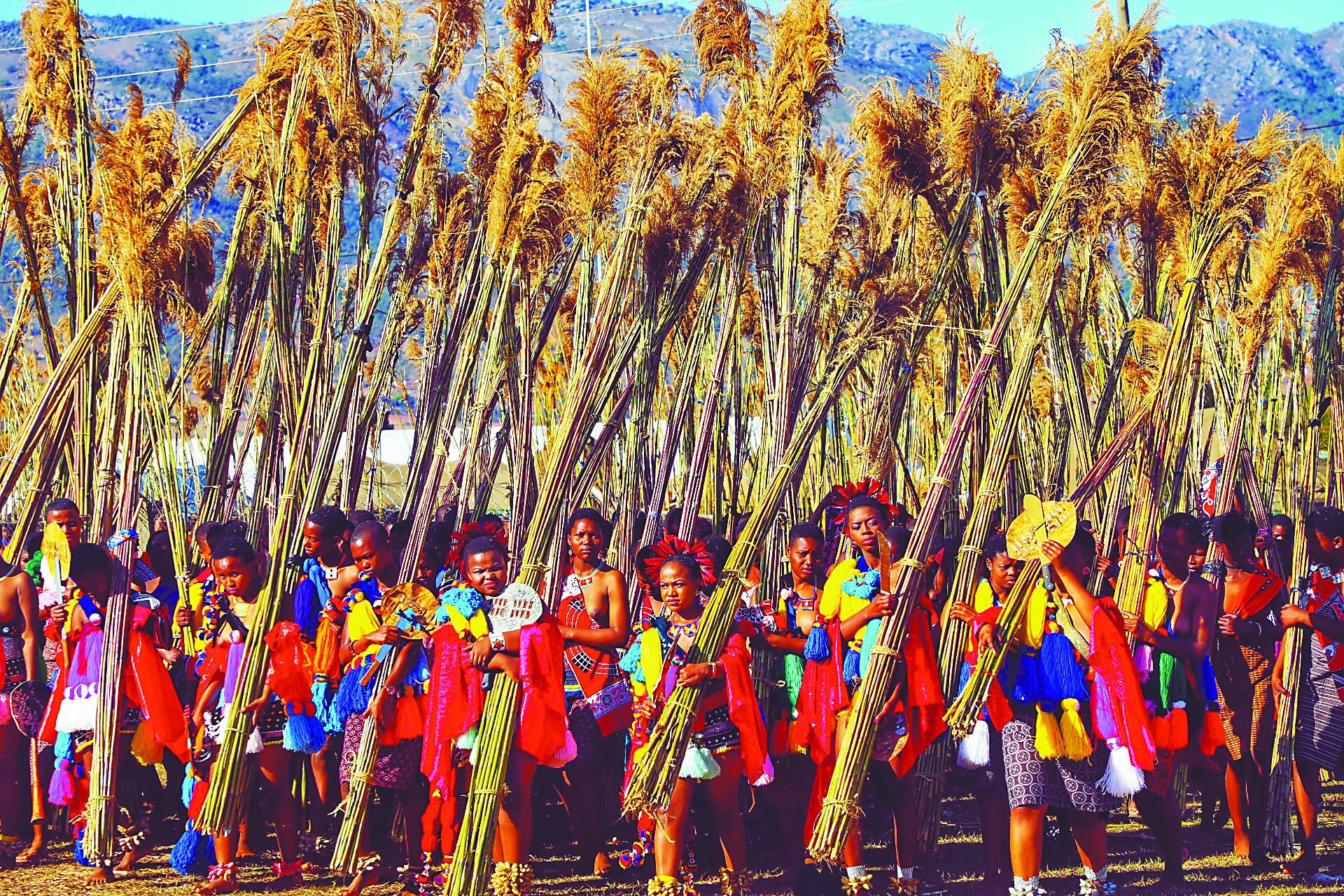 斯威士兰芦苇节,争议中继续