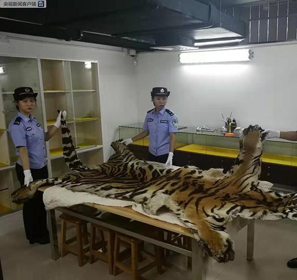 海关破获走私老虎等濒危动植物及制品案,抓获40人