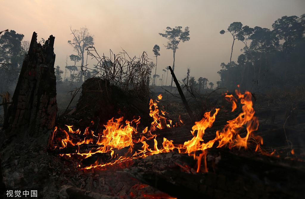 巴西里约帕尔多森林火灾持续