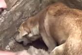 印度一只狗妈妈在废墟中拼命挖掘拯救被埋幼崽