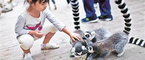 北京野生动物园邀游客为小动物做月饼
