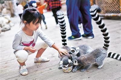 北京野生动物园邀游客为小动物制作专属月饼