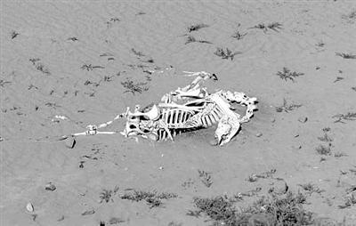 地球正经历第七次物种大灭绝?