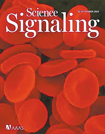 新机制能诱导脾脏应激性红细胞生成