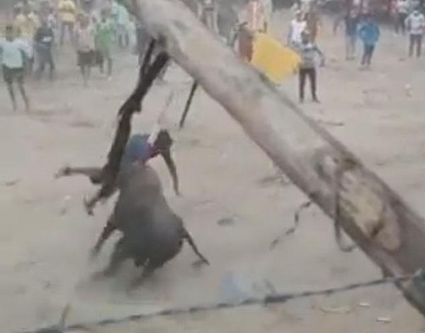 哥伦比亚斗牛比赛中公牛暴怒 一男子惨遭袭击