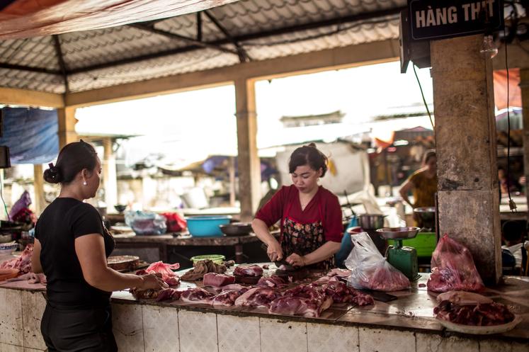 非洲猪瘟袭击越南全境 超过400万头生猪被扑杀销毁