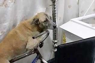 菲律宾一只忠犬街头苦等主人 知其去世悲伤不已