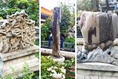 故宫御花园里奇奇怪怪石 像木头像海参又像画