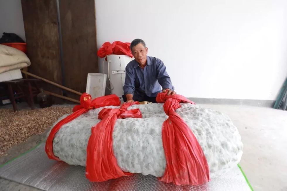 """447.8斤!杭州出了只""""瓜王""""!需要4个壮汉才能抬起"""